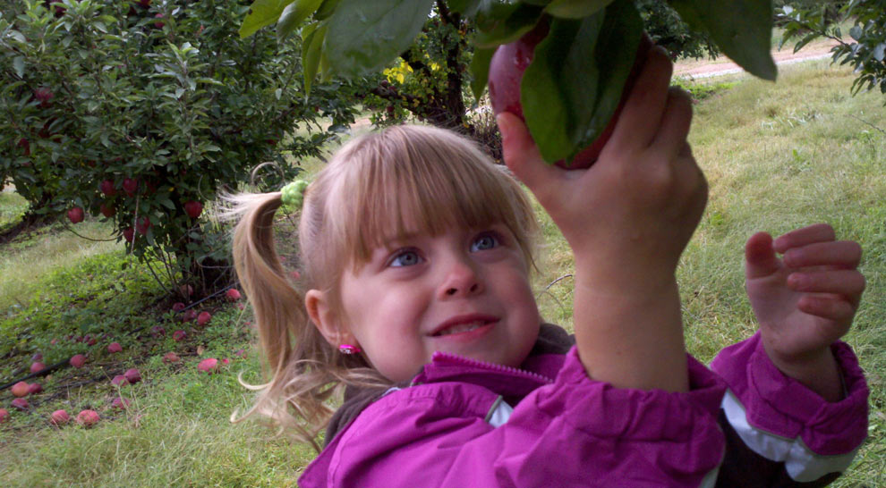 Apple Picking - Maple Lawn Farms Orchard (New Park, PA)